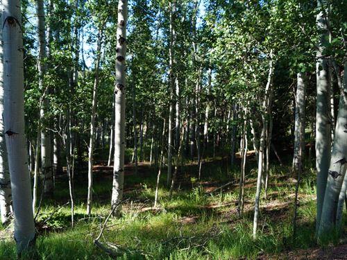 Level Build Site Trees Mueller : Florissant : Teller County : Colorado