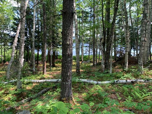 Lakefront Land For Sale in Maine : Burlington : Penobscot County : Maine