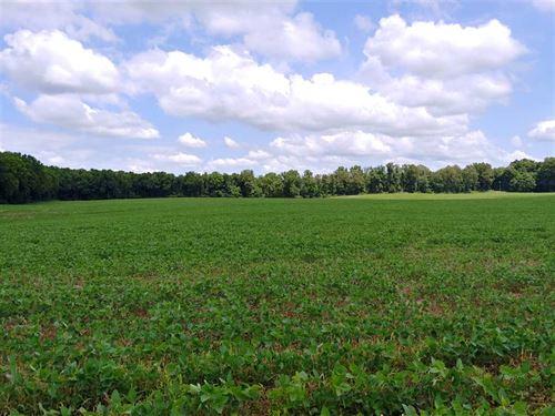 Decatur Rd, Cass Cty, 130 : Decatur : Cass County : Michigan