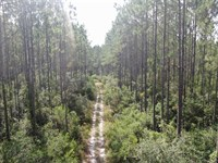 116 Acre Timber/Hunting Tract : Perry : Taylor County : Florida