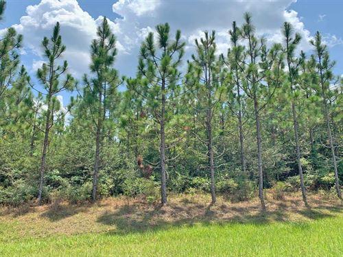 Camp 5 Tract : Century : Escambia County : Florida