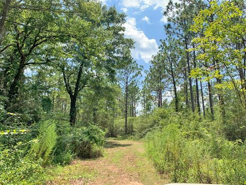 Wiggins Tract : Century : Escambia County : Florida