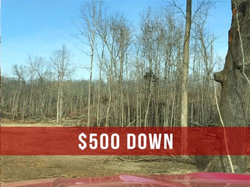 $500 Down On Hunting Land : Ava : Douglas County : Missouri