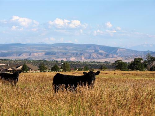 Cedaredge CO Mountain Land : Cedaredge : Delta County : Colorado