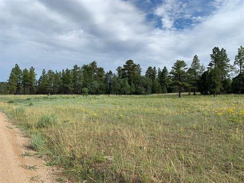 Land Surrounded Carson Forrest : Canjilon : Rio Arriba County : New Mexico