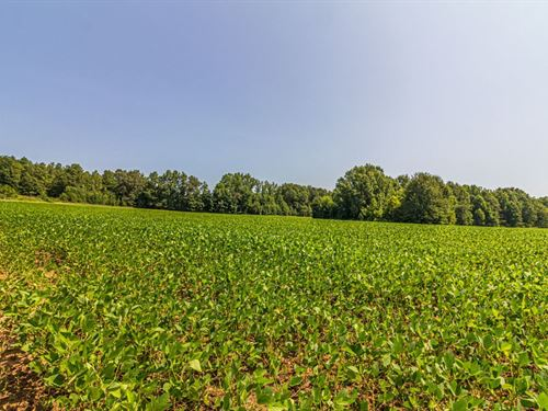 105 Acres Income Producing : Michie : McNairy County : Tennessee