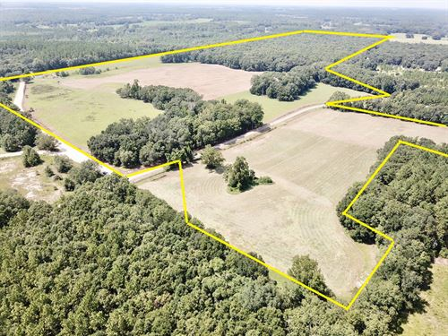 132 Acre Farm Black, Alabama W : Black : Geneva County : Alabama
