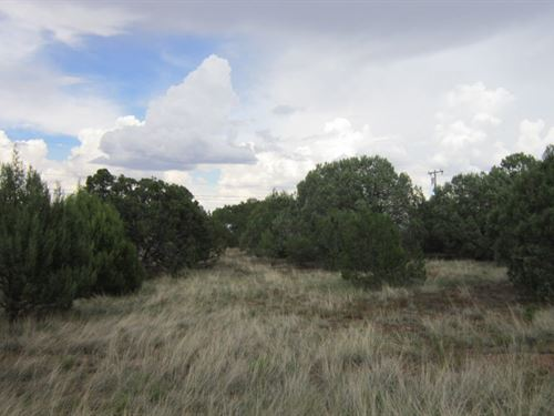 .25 Acre Lot In Show Low With Power : Show Low : Navajo County : Arizona