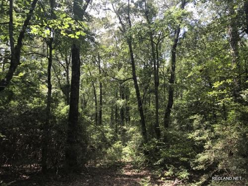20 Ac, Mixed Timber Hunting Tract : Vixen : Caldwell Parish : Louisiana