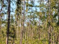 10 Ac Home Site With Creek : Macon : Jones County : Georgia