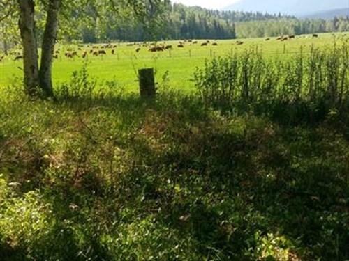 Stunning Canadian Ranch : McBride : Canada