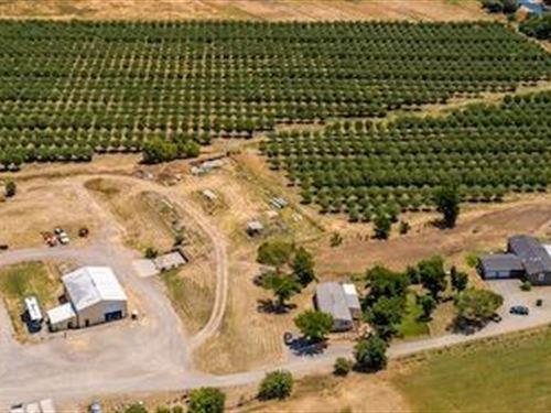 40 Acres Of Walnuts 2 Homes : Winters : Solano County : California