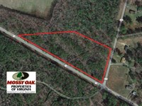 6 Acres of Mature Timber Land For : Surry : Surry County : Virginia