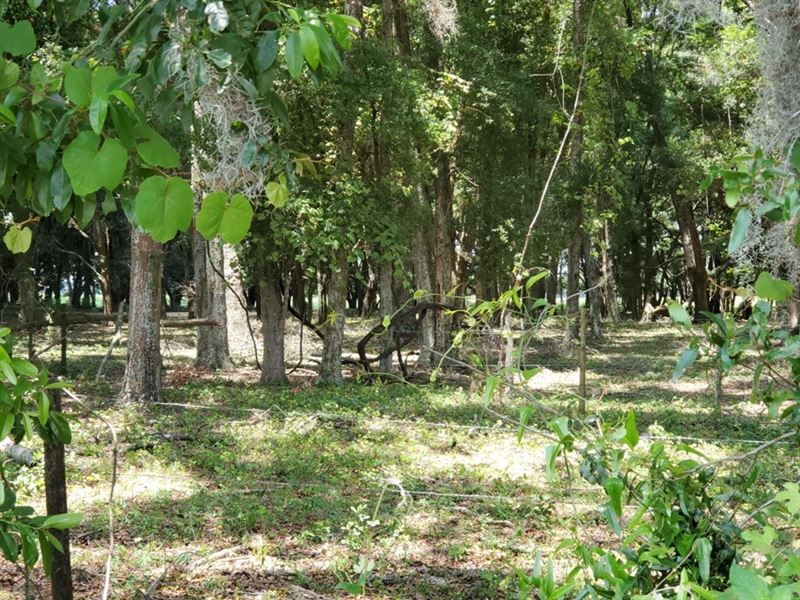 20 Acres on NE Hwy 27 Alt : Chiefland : Levy County : Florida