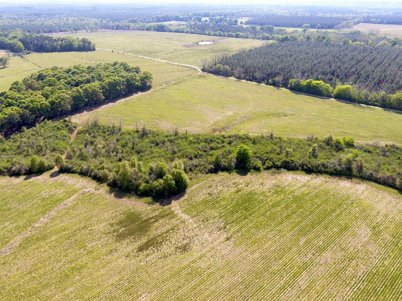 Cr27 L-Pond Rd Row Crop Farm Land : Castleberry : Covington County : Alabama