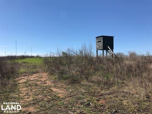 Brown Road Homesite, Hunting, & Tim : Northport : Tuscaloosa County : Alabama