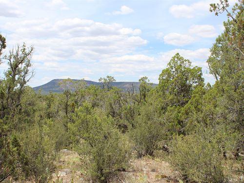40 Acres Wooded Views Northern AZ : Seligman : Yavapai County : Arizona