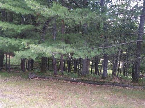 Buildable Lots Canada Creek Ranch : Atlanta : Montmorency County : Michigan