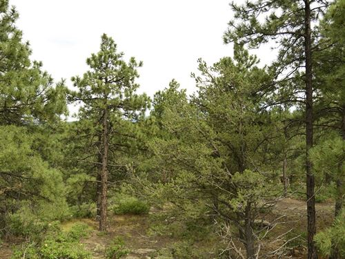Treed Lot Near Weston, 10Ac +A12-20 : Weston : Las Animas County : Colorado