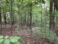 Beautful 1.1 Acre Timbered Lot on : Somerville : Fayette County : Tennessee