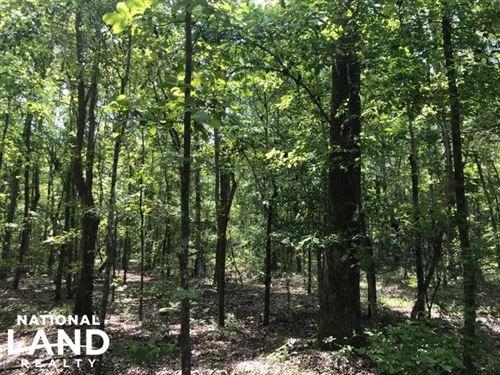 Alcolu Land Investment : Alcolu : Clarendon County : South Carolina