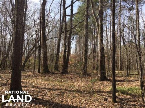 Marion County Hunting & Timber Trac : Hamilton : Marion County : Alabama
