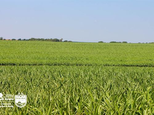 Lincoln County, Kansas Farmland : Beverly : Lincoln County : Kansas