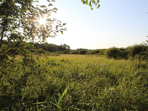 10 Acres Located Mille Lacs County : Milaca : Mille Lacs County : Minnesota