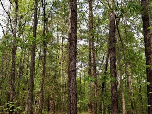 40 Acres With Creek : Columbiana : Shelby County : Alabama