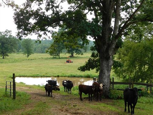 49 Acres For Sale in Ripley County : Doniphan : Ripley County : Missouri