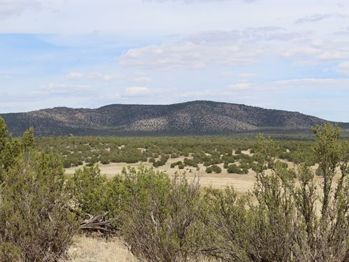 Land Mountain View Meadow Wildlife : Prescott : Yavapai County : Arizona
