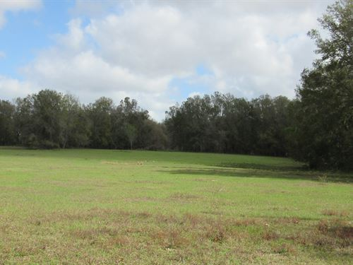Marion County Ranch & Development : Citra : Marion County : Florida