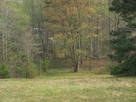 15+/- Acres Pastureland and Creek : Millerville : Clay County : Alabama