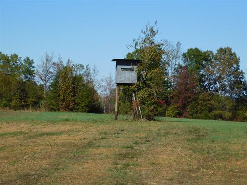 Land For Sale : Michie : McNairy County : Tennessee
