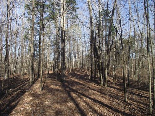 Land For Sale : Savannah : Hardin County : Tennessee