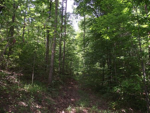Wooded Land For Sale : Waynesboro : Wayne County : Tennessee
