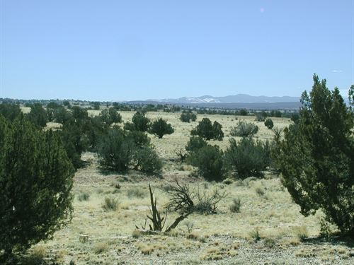 36 Acre Homestead With Power $329Mo : S : Apache County : Arizona