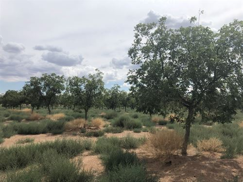NM Pecan Farm : Oscura : Lincoln County : New Mexico