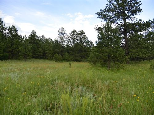 Co Paradise 6 Treed Acres +A12-26 : Weston : Las Animas County : Colorado