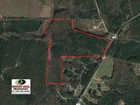 83 Acres of Timber And Hunting Lan : Macon : Warren County : North Carolina