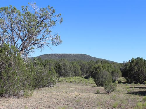 Arizona Mountain Property Seligman : Seligman : Yavapai County : Arizona