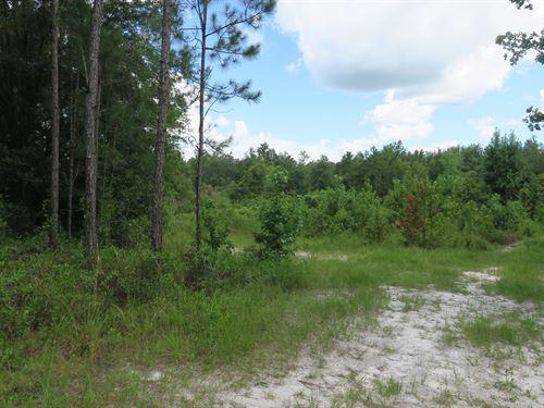 5 Acres For Sale : Lake City : Columbia County : Florida
