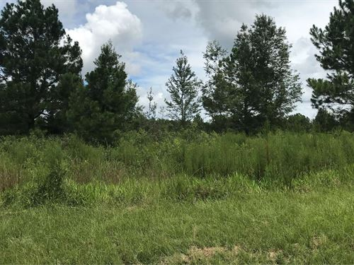 Great Area to Build Home Put : McAlpin : Suwannee County : Florida