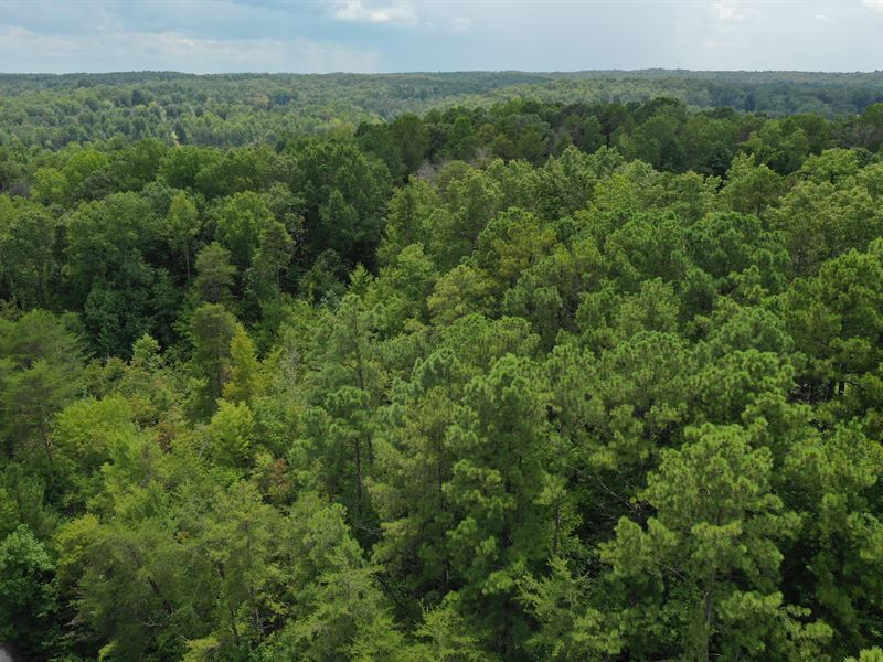 Wooded Acreage : Seneca : Oconee County : South Carolina