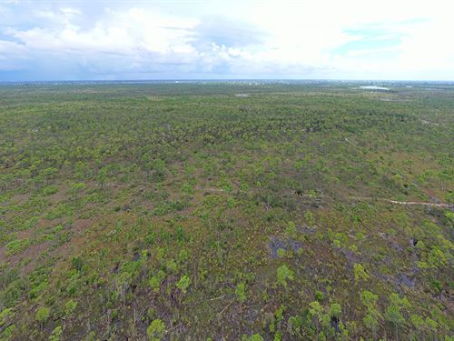 Hunting Tract-Nw Lee County : Cape Coral : Lee County : Florida