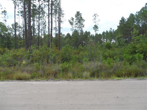 Lot 17B, 1.37 Acres : Ludowici : Long County : Georgia