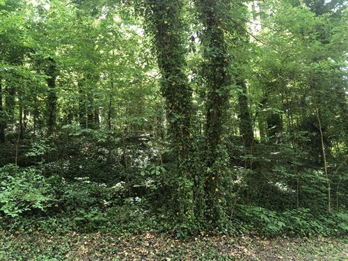 .48+- Acre Wooded Lot R2 Dalton, G : Dalton : Whitfield County : Georgia