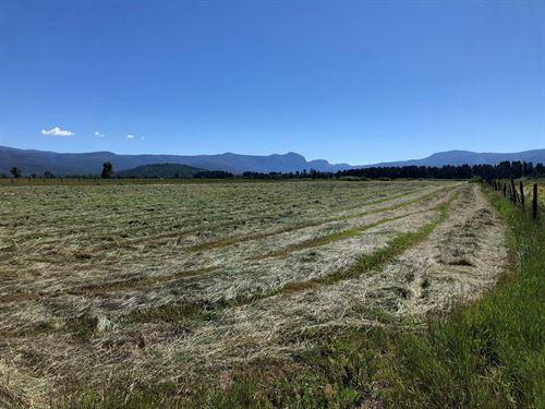 Great Farm Irrigation Exsisting Hay : Los Ojos : Rio Arriba County : New Mexico