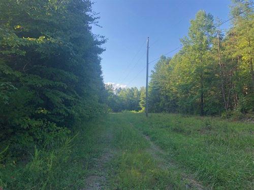 Wilder, Tn/Hunting Land/Marketable : Wilder : Fentress County : Tennessee