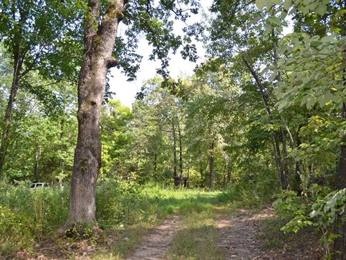 50.55 Acres With Spring Fed Cr : Marshall : Searcy County : Arkansas